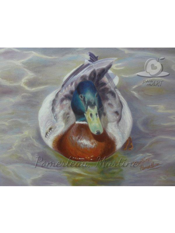 plumage nuptial colvert